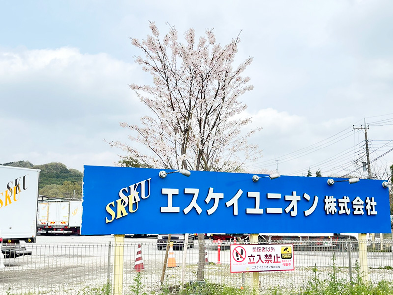 桜の写真03